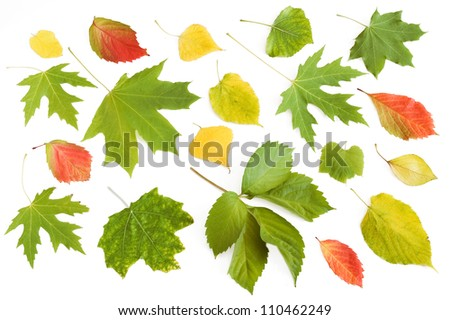 Autumn leaves set isolated on white with sample text - stock photo