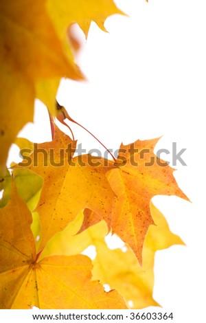Autumn leaves (shallow dof) - stock photo