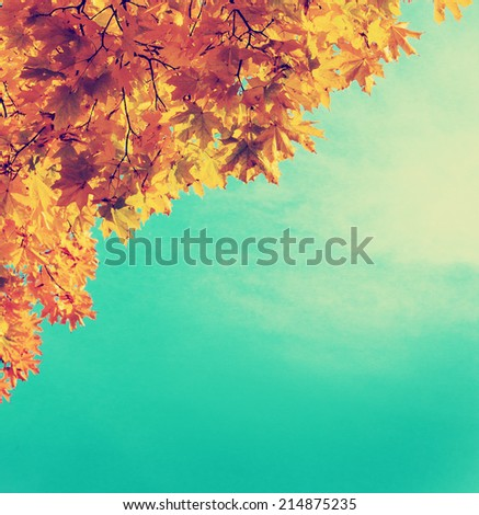 Autumn leaves  sky background/ Autumn Trees Leaves in vintage color - stock photo