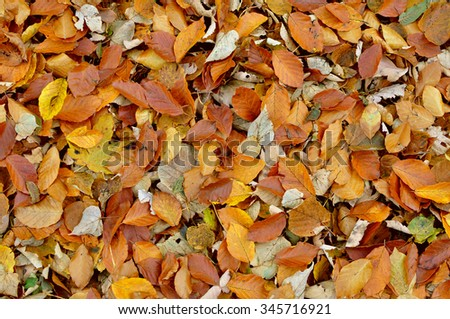 Autumn leaves texture - stock photo