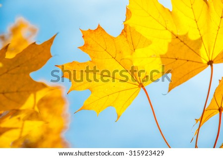 Autumn leaves under a sunny blue sky