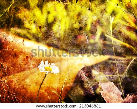 autumn leaves, very shallow focus, Close up of colorful autumnal magnolia leaf and chamomile flower in the sunshine - stock photo