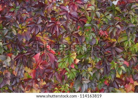 Autumn leaves wall background - stock photo