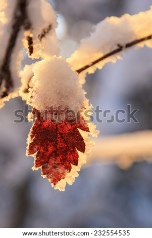 Autumn leaves with frost and snow - stock photo