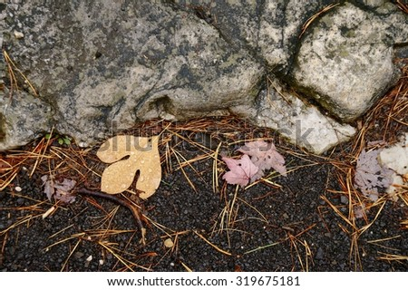 Autumn leaves with water drops lying on the ground among pine needles and rocks.