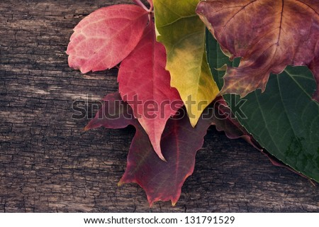 Autumn leaves  with wood background - stock photo