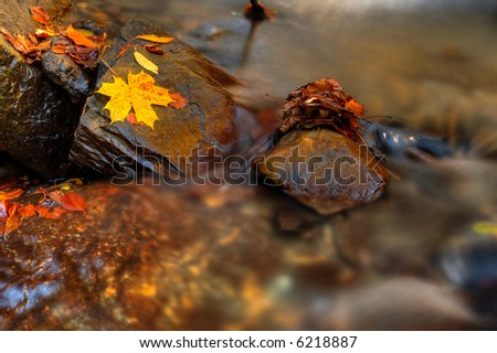 Autumn loneliness - single golden leave on rock in mountain river