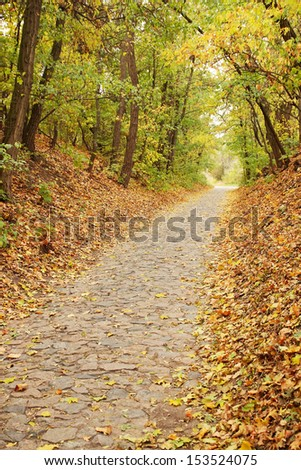 Autumn maple alley in the forest with falling leaves - stock photo