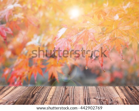 Autumn maple blur background with wood plank