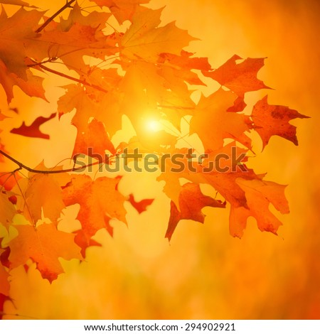 Autumn maple branch with bright vibrant leaves on blurred fall foliage background - stock photo