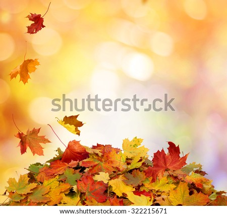 Autumn maple falling leaves i - stock photo