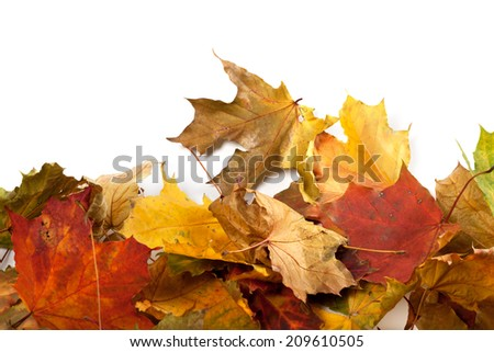 Autumn maple-leaf background with copy space - stock photo