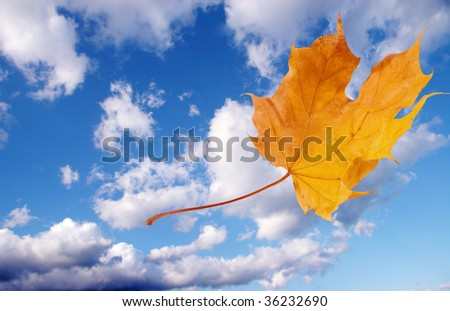 Autumn maple leaf flying away against the background of blue sky with clouds - stock photo