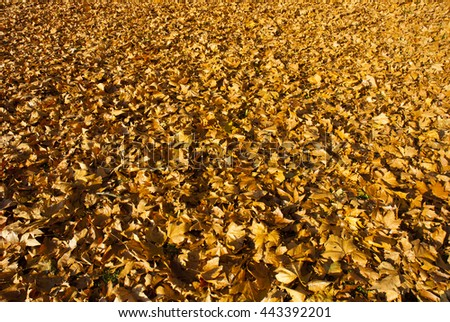 autumn maple leaf litter texture background - stock photo