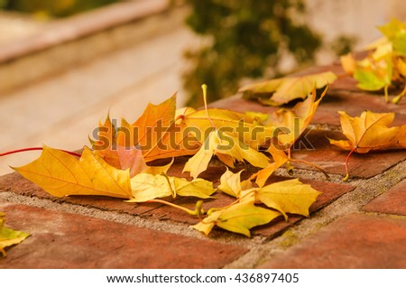 Autumn maple leaf lying on the tile, seasonal fall natural background - stock photo