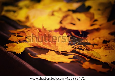 Autumn maple leaf lying on the wooden bench, seasonal fall natural background - stock photo