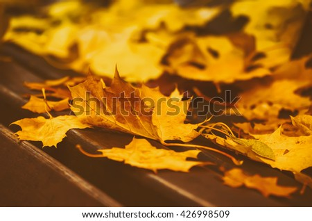 Autumn maple leaf lying on the wooden bench, seasonal fall vintage, hipster natural background - stock photo