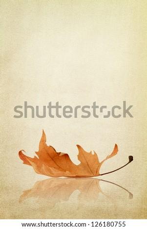 Autumn maple leaf on fabric texture - stock photo