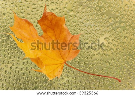 Autumn maple leaf on the yellow glass with raindrops - stock photo