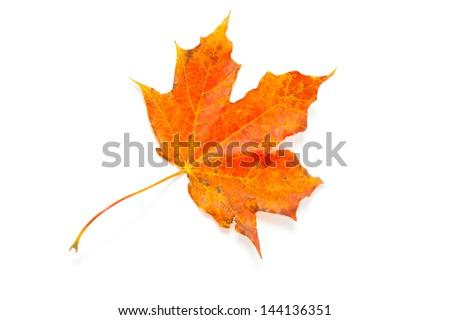 autumn maple leaf over white, isolated - stock photo