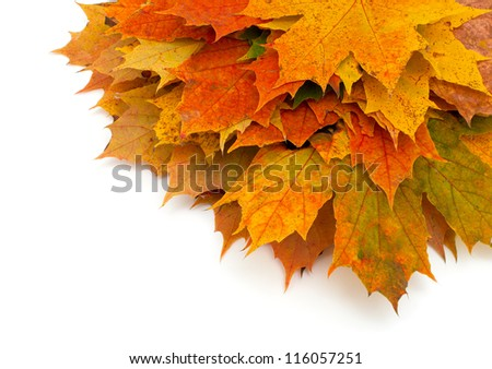 autumn maple leafs and empty space for your text