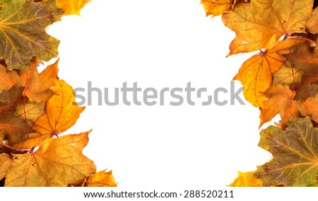 Autumn maple-leafs background with copy space - stock photo