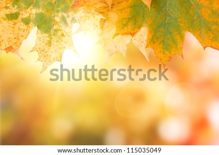 autumn maple leave with real natural bokeh - stock photo