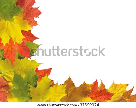 Autumn maple leaves border made out of different  leaves isolated on white