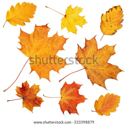 autumn maple leaves collection, object set isolated on white - stock photo