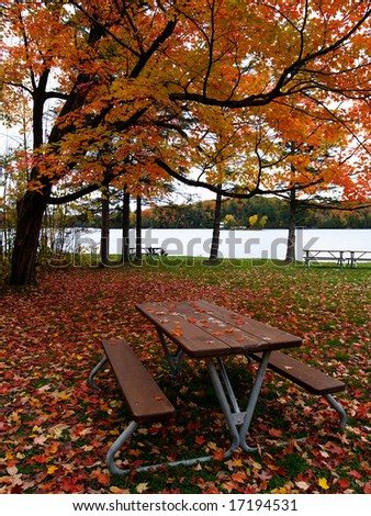 Autumn maple leaves fallen on the ground and a picnic table - stock photo