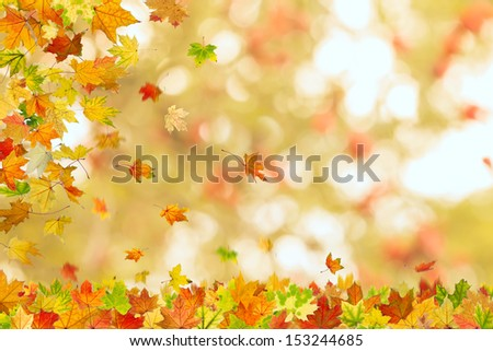 Autumn maple leaves falling down on natural background. - stock photo