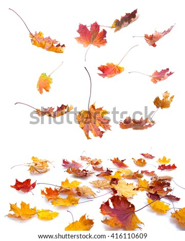 autumn maple leaves falling on white background