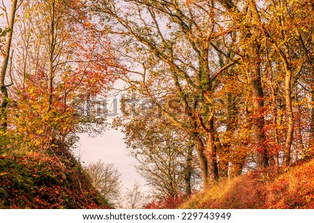 Autumn maple leaves in warm red and yellow colors - stock photo