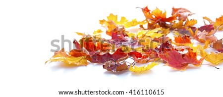 autumn maple leaves isolated on white background - stock photo