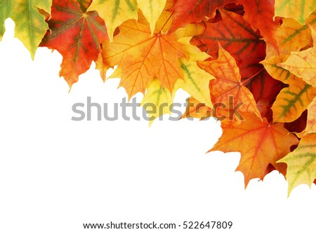 Autumn maple leaves isolated on white, fall background