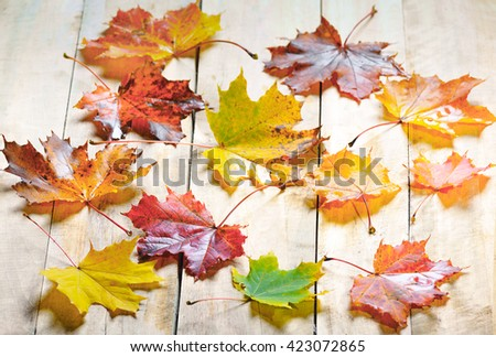 autumn maple leaves isolated on wood background - stock photo