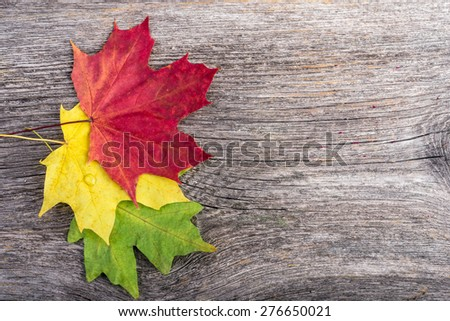 Autumn maple leaves on gray wooden background - stock photo