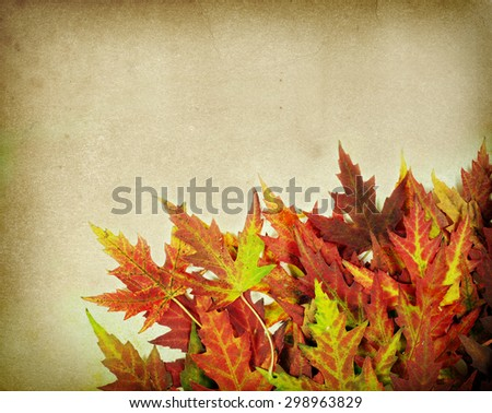 autumn maple leaves on old paper