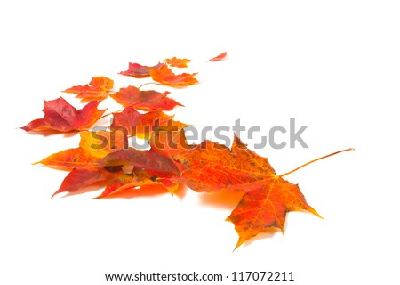 autumn maple leaves over white background - stock photo