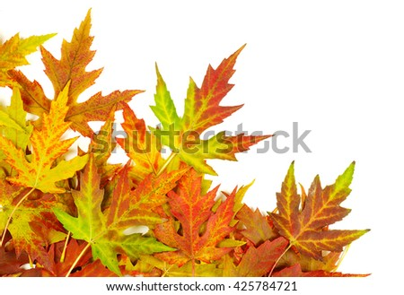 autumn maple leaves with copy space for your text - stock photo