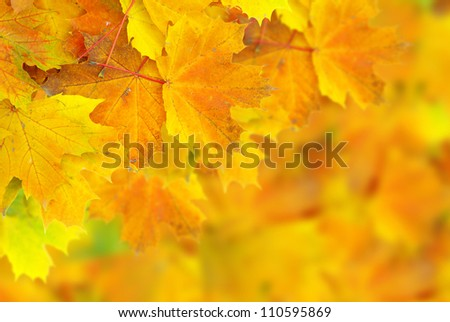 autumn maple leaves with selective focus - stock photo