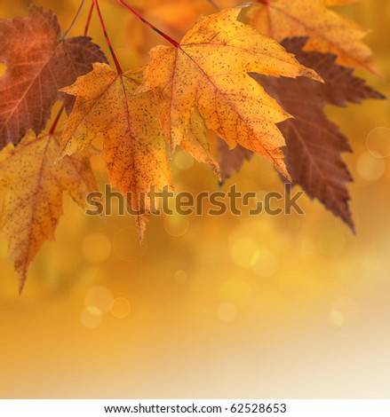 Autumn maple leaves with shallow focus background - stock photo
