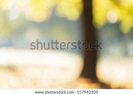 autumn maple out of focus background, good for backdrop - stock photo