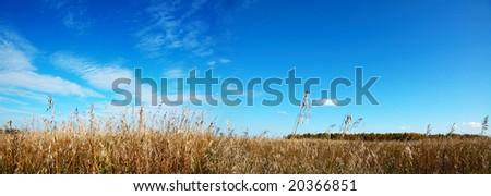 autumn meadow - stock photo