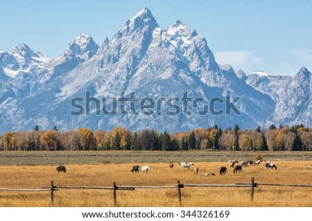 Autumn meadow filled with ranch horses with the Grand Teton mountain range in the background.