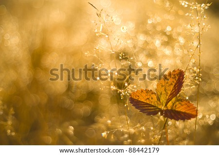 autumn meadow in the dew into a sunny day - stock photo