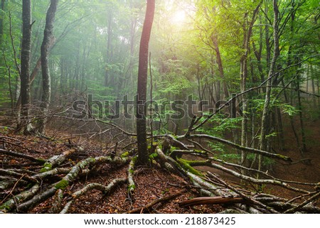 Autumn mist landscape. Evening sun shines through the green leaves of a forest. Trees wet after a rain. - stock photo