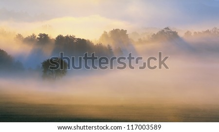 Autumn Mist, trees are wet, damp fog of forest - stock photo
