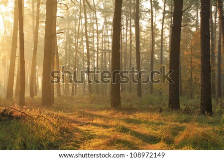 Autumn misty forest - stock photo