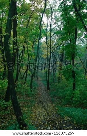 Autumn misty forest - stock photo